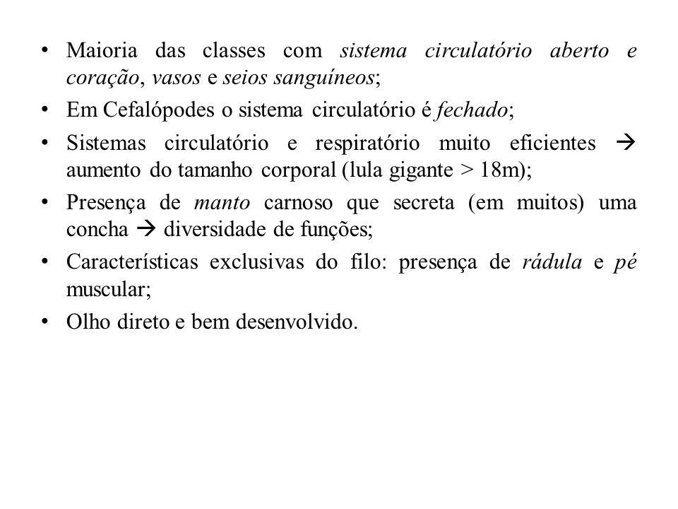 Maioria das classes com sistema circulatório aberto e coração, vasos e seios sanguíneos; Em Cefalópodes o sistema circulatório é fechado; Sistemas cir