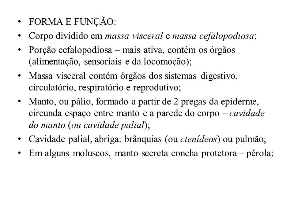 FORMA E FUNÇÃO: Corpo dividido em massa visceral e massa cefalopodiosa; Porção cefalopodiosa – mais ativa, contém os órgãos (alimentação, sensoriais e