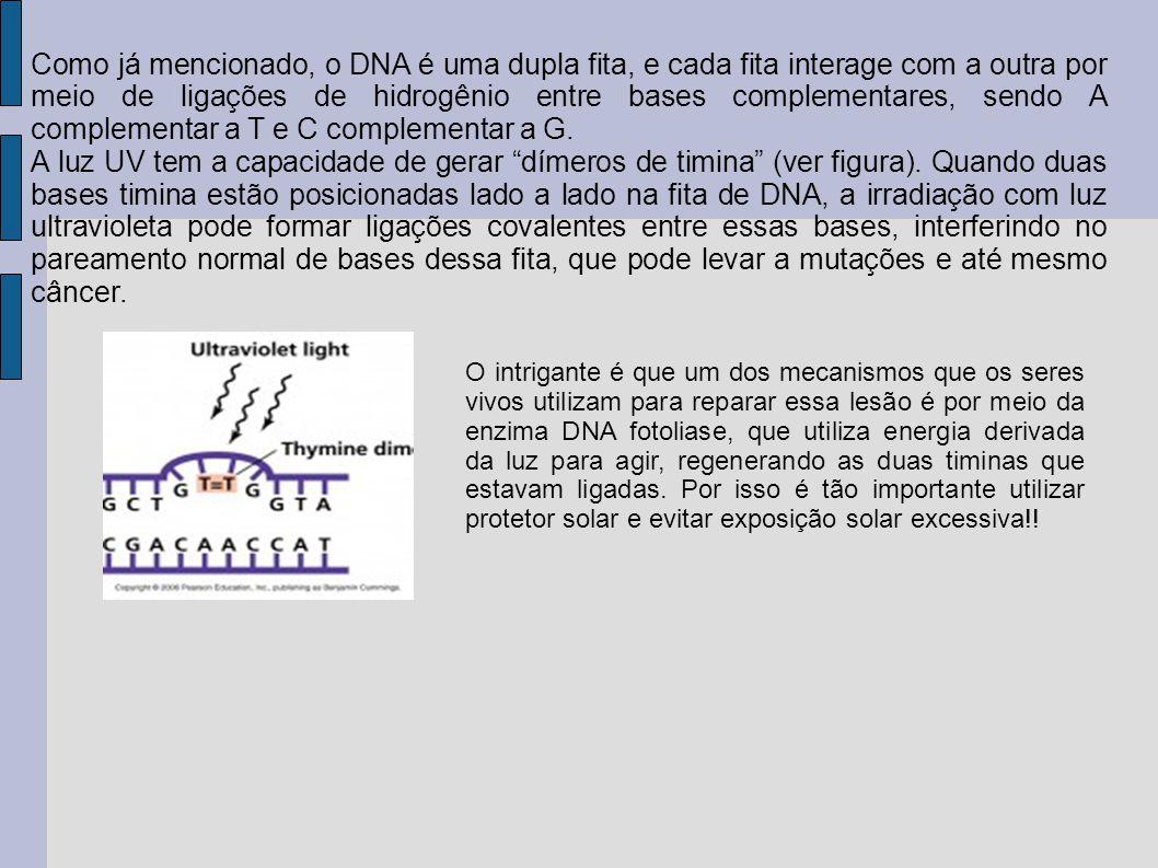 Como já mencionado, o DNA é uma dupla fita, e cada fita interage com a outra por meio de ligações de hidrogênio entre bases complementares, sendo A co