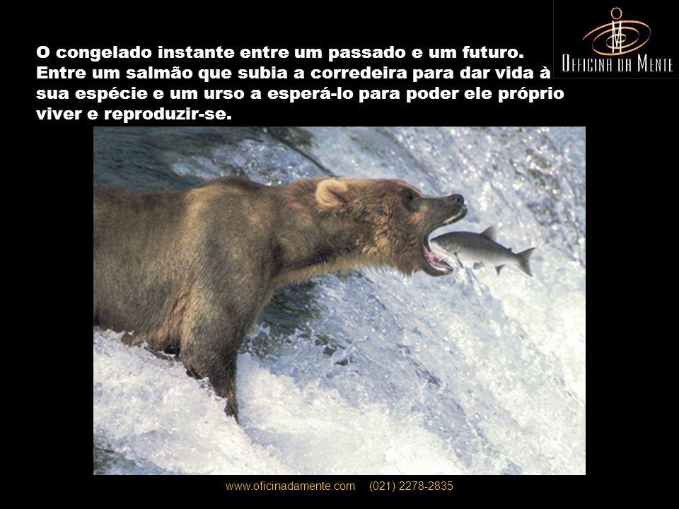 www.oficinadamente.com (021) 2278-2835 Um inesperado balé entre uma baleia e um golfinho.