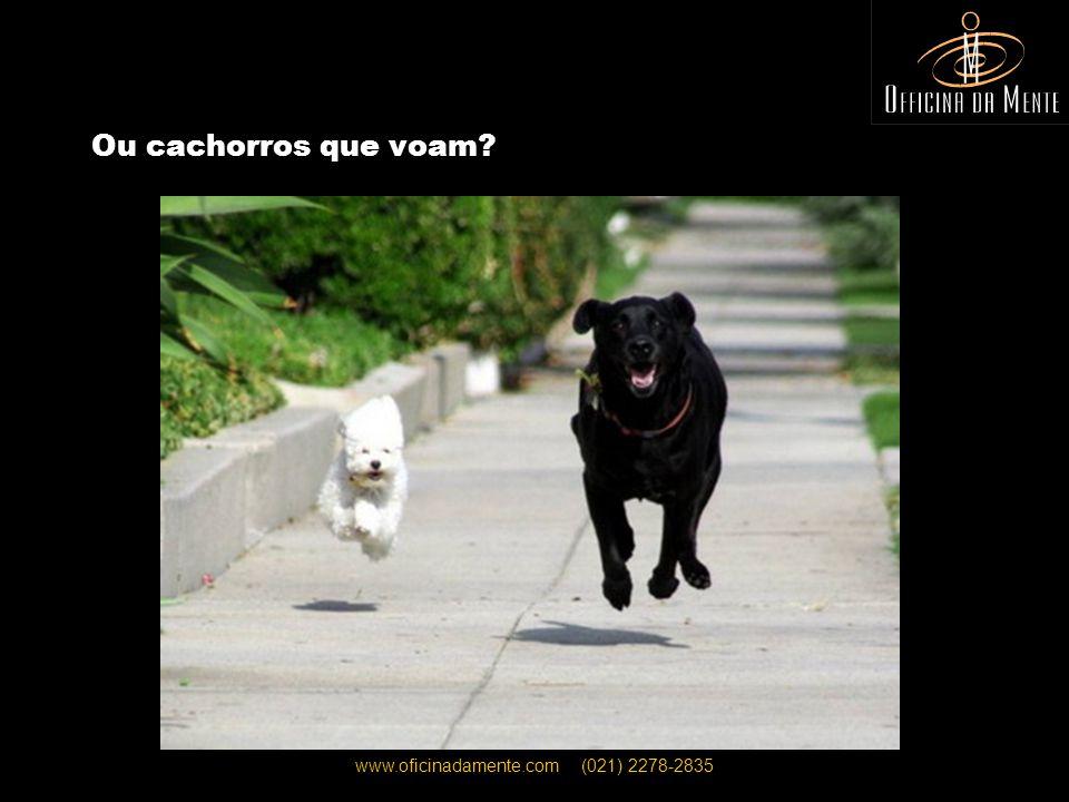 www.oficinadamente.com (021) 2278-2835 Ou cachorros que voam?