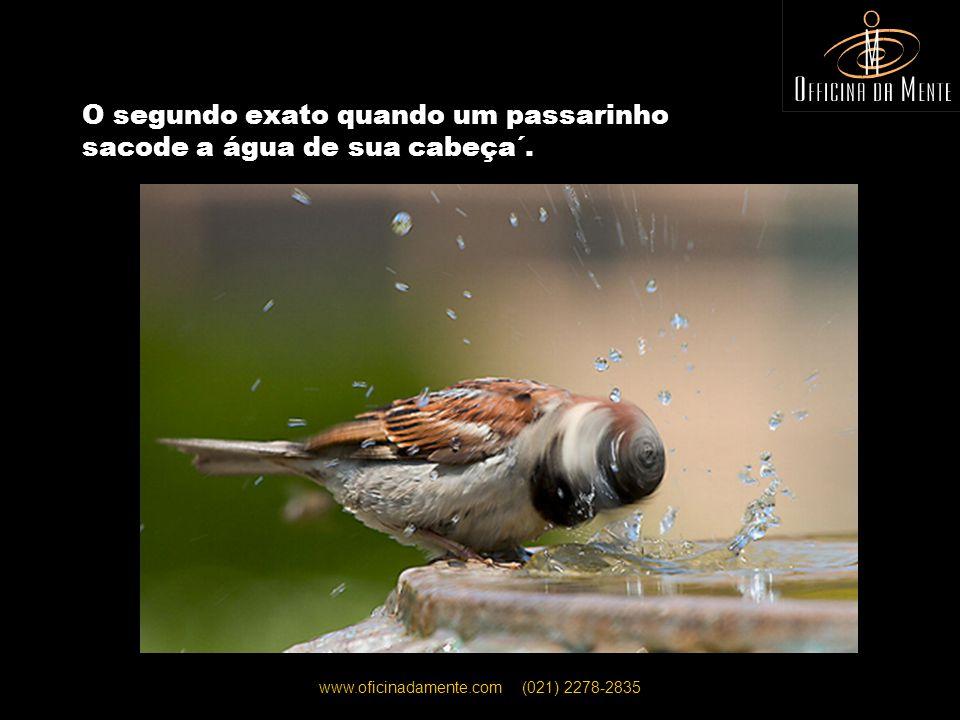 www.oficinadamente.com (021) 2278-2835 O segundo exato quando um passarinho sacode a água de sua cabeça´.