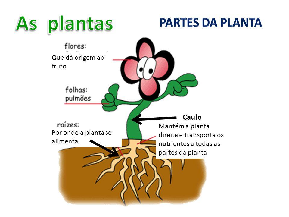Que dá origem ao fruto Por onde a planta se alimenta. Caule Mantém a planta direita e transporta os nutrientes a todas as partes da planta