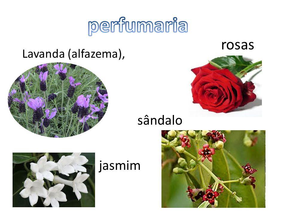sândalo Lavanda (alfazema), rosas jasmim