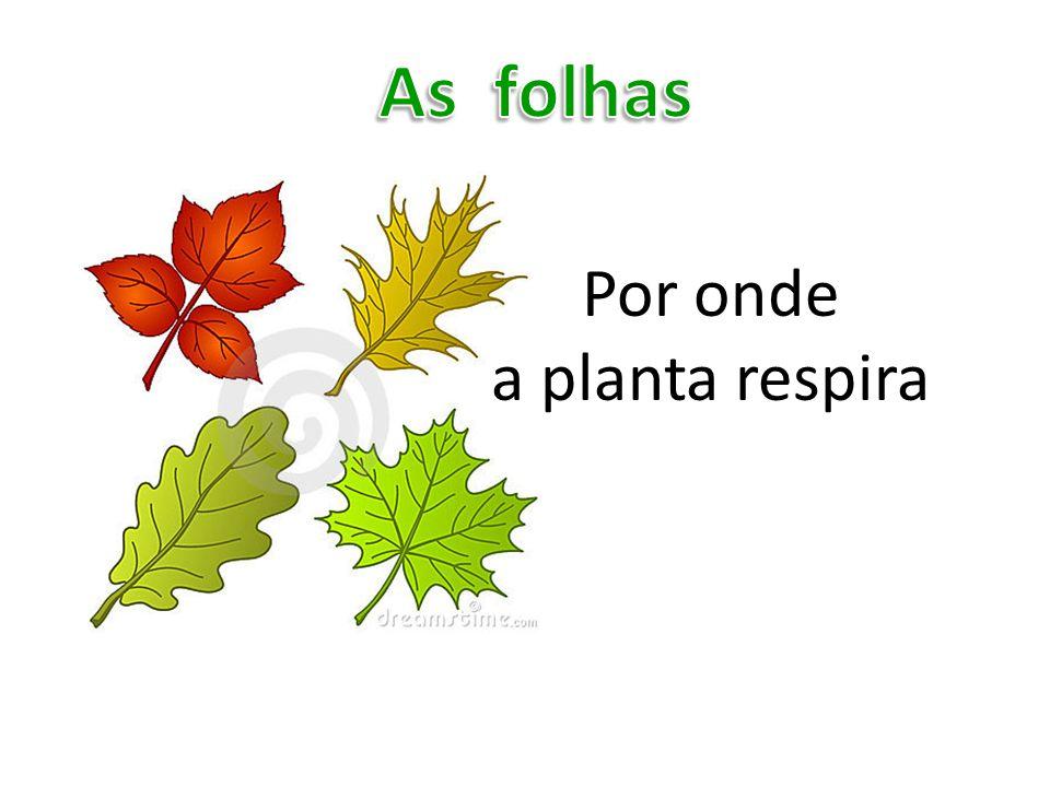 Por onde a planta respira