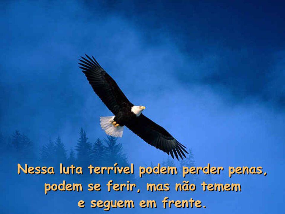 Elas não se escondem! Abrem suas asas que podem voar a uma velocidade de até 90 km/h, e enfrentam a tormenta! Elas sabem que as nuvens escuras, a temp