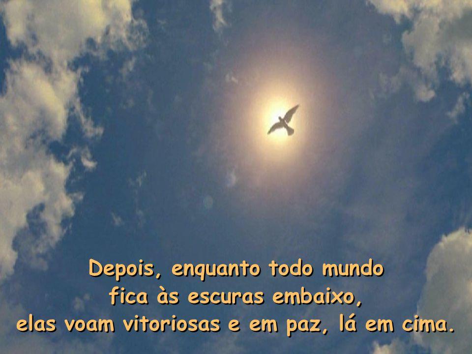 Depois, enquanto todo mundo fica às escuras embaixo, elas voam vitoriosas e em paz, lá em cima.