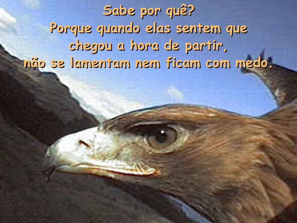 Finalmente, as águias também morrem, mas alguma vez você achou por aí um cadáver de águia? De galinha talvez, de cachorro ou de pombo, quem sabe até d