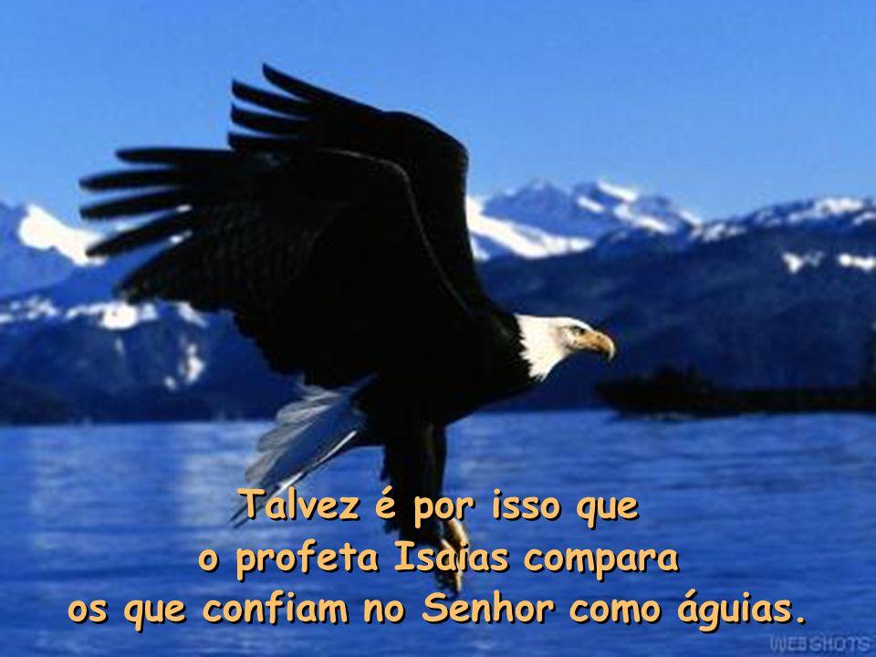Talvez é por isso que o profeta Isaias compara os que confiam no Senhor como águias.