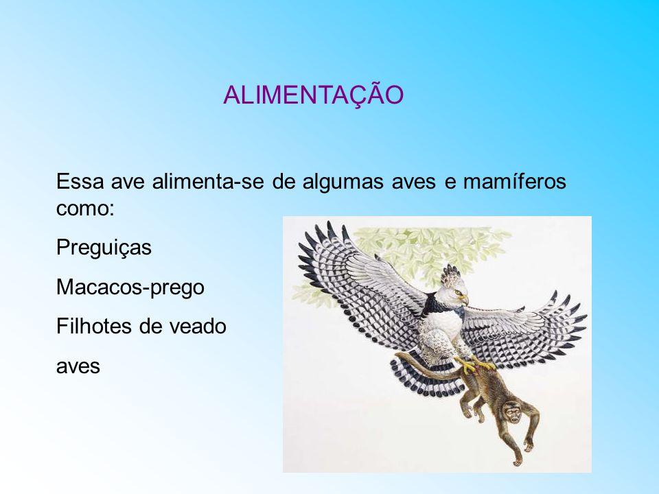Essa ave alimenta-se de algumas aves e mamíferos como: Preguiças Macacos-prego Filhotes de veado aves ALIMENTAÇÃO
