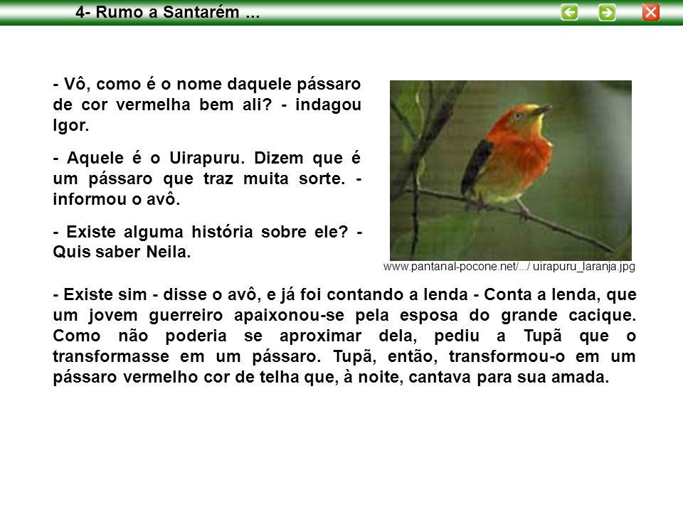 - Vô, como é o nome daquele pássaro de cor vermelha bem ali? - indagou Igor. - Aquele é o Uirapuru. Dizem que é um pássaro que traz muita sorte. - inf