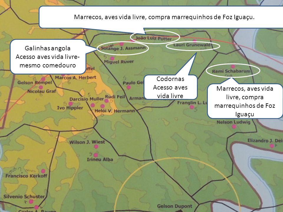 Marrecos, aves vida livre, compra marrequinhos de Foz Iguaçu Marrecos, aves vida livre, compra marrequinhos de Foz Iguaçu. Galinhas angola Acesso aves