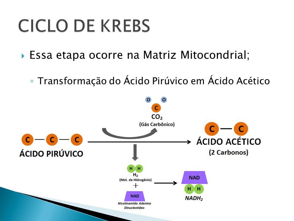 Essa etapa ocorre na Matriz Mitocondrial; Transformação do Ácido Pirúvico em Ácido Acético +