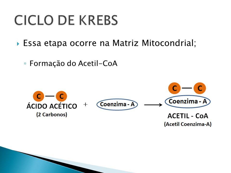 Essa etapa ocorre na Matriz Mitocondrial; Formação do Acetil-CoA +