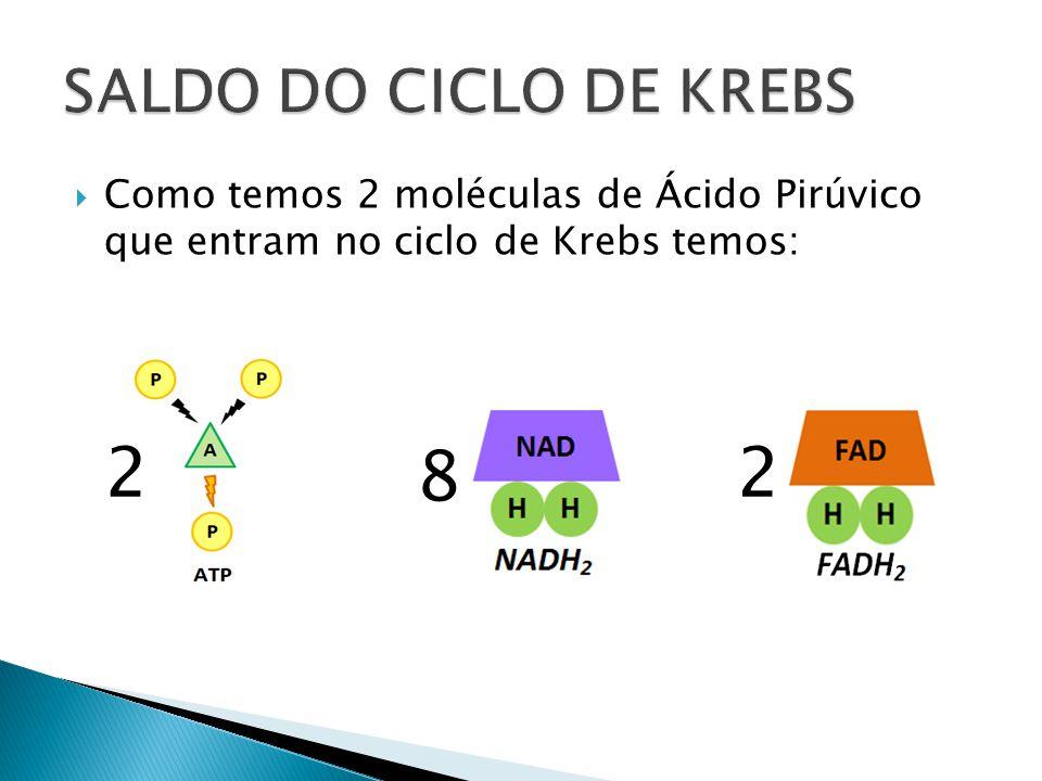 Como temos 2 moléculas de Ácido Pirúvico que entram no ciclo de Krebs temos: 2 8 2