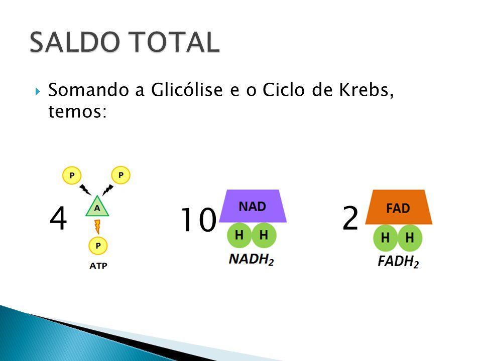 Somando a Glicólise e o Ciclo de Krebs, temos: 4 10 2