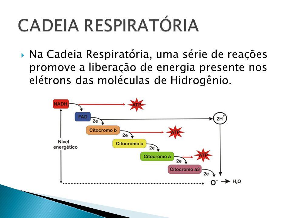 Na Cadeia Respiratória, uma série de reações promove a liberação de energia presente nos elétrons das moléculas de Hidrogênio.