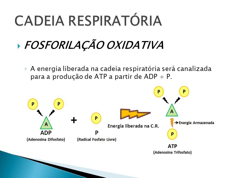 FOSFORILAÇÃO OXIDATIVA A energia liberada na cadeia respiratória será canalizada para a produção de ATP a partir de ADP + P. Energia liberada na C.R.