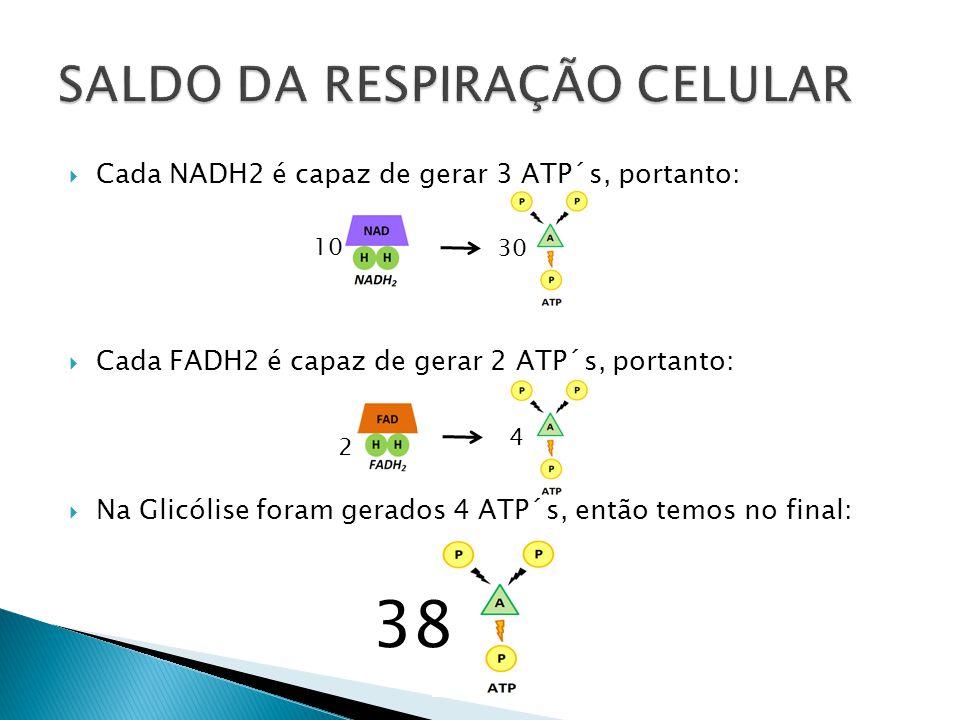 Cada NADH2 é capaz de gerar 3 ATP´s, portanto: Cada FADH2 é capaz de gerar 2 ATP´s, portanto: Na Glicólise foram gerados 4 ATP´s, então temos no final