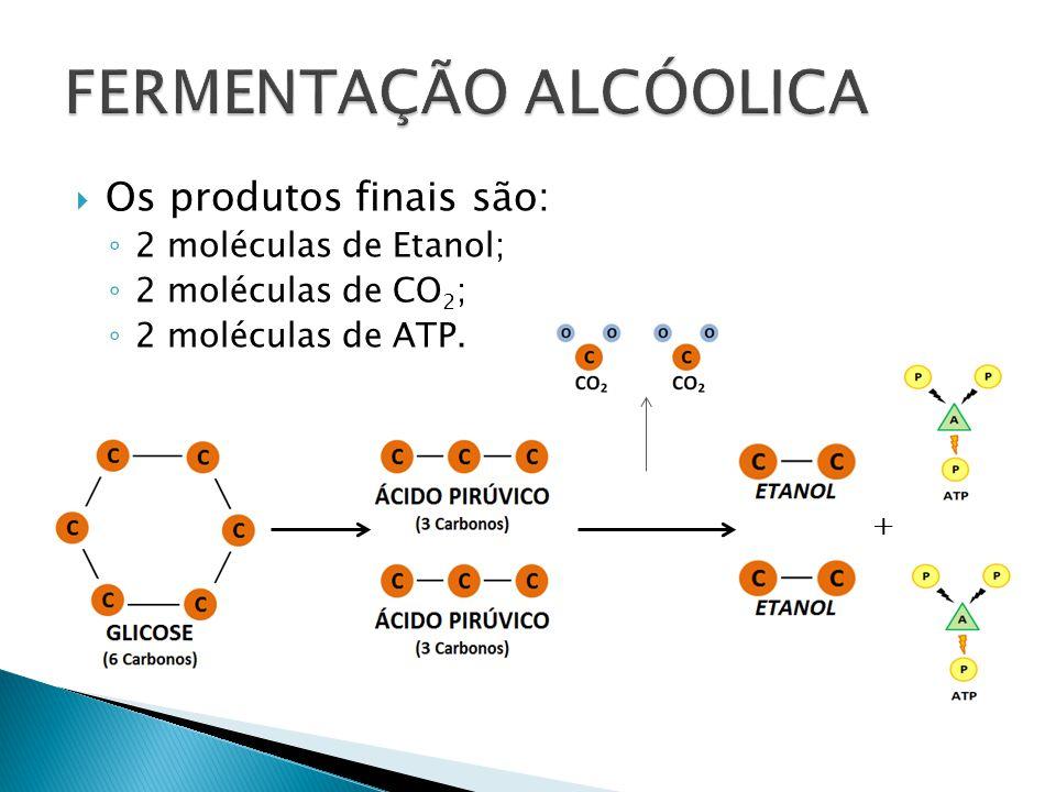 Os produtos finais são: 2 moléculas de Etanol; 2 moléculas de CO 2 ; 2 moléculas de ATP. +