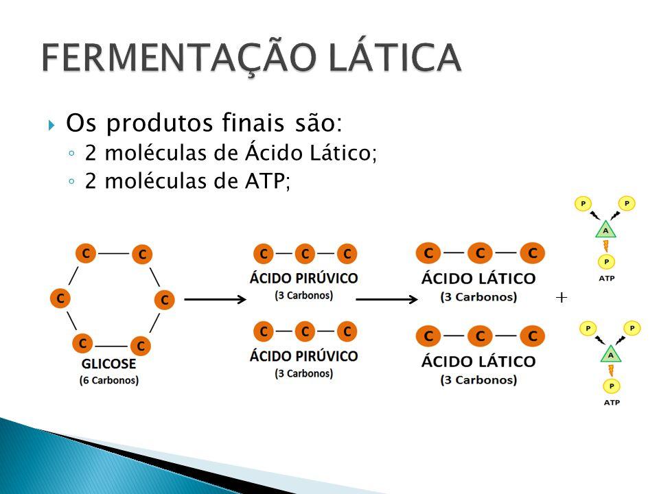 Os produtos finais são: 2 moléculas de Ácido Lático; 2 moléculas de ATP; +