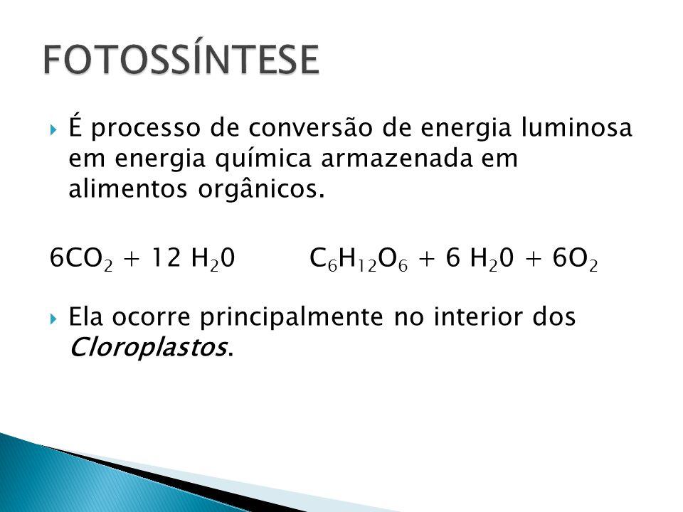 É processo de conversão de energia luminosa em energia química armazenada em alimentos orgânicos. 6CO 2 + 12 H 2 0 C 6 H 12 O 6 + 6 H 2 0 + 6O 2 Ela o