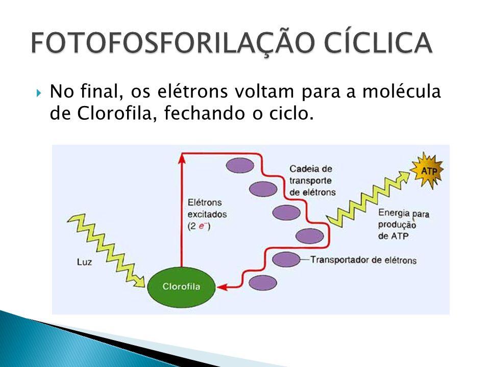 No final, os elétrons voltam para a molécula de Clorofila, fechando o ciclo.