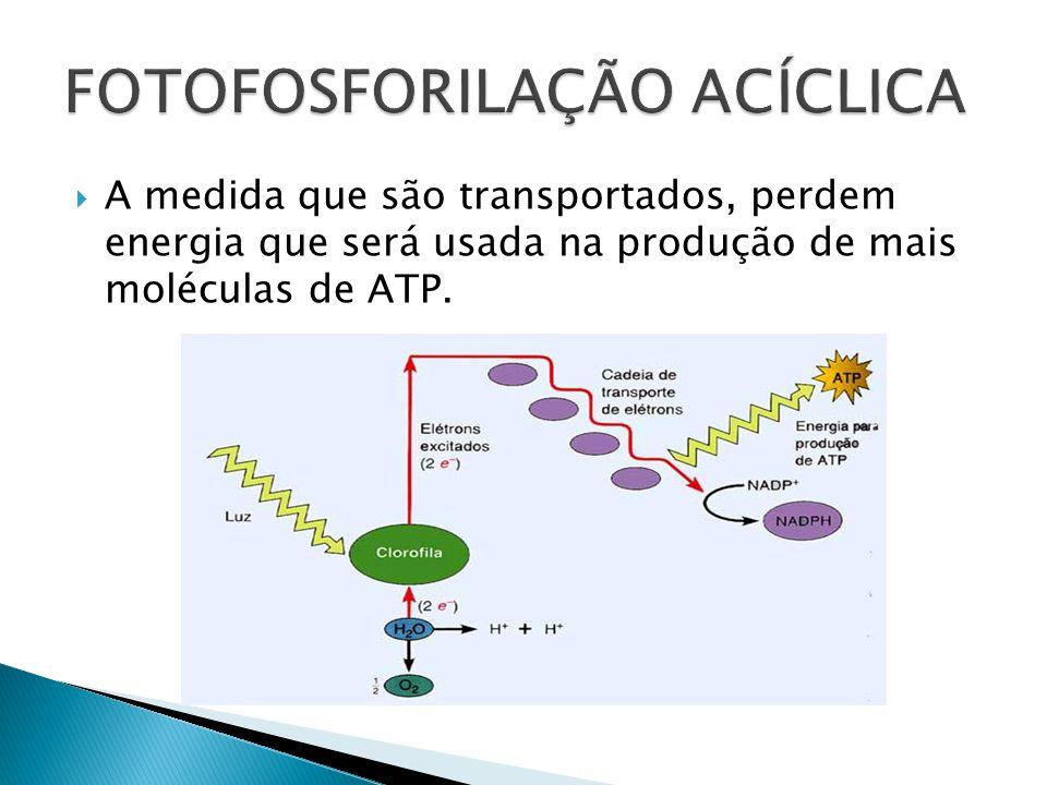 A medida que são transportados, perdem energia que será usada na produção de mais moléculas de ATP.