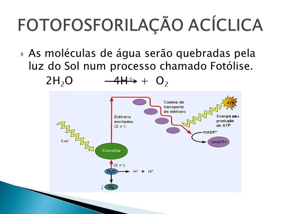 As moléculas de água serão quebradas pela luz do Sol num processo chamado Fotólise. 2H 2 O 4H + + O 2