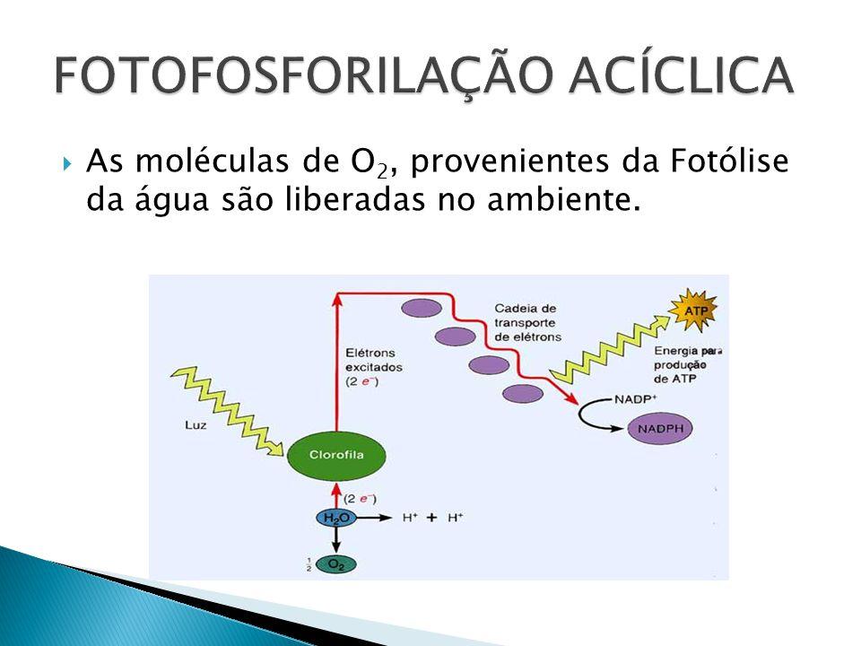 As moléculas de O 2, provenientes da Fotólise da água são liberadas no ambiente.