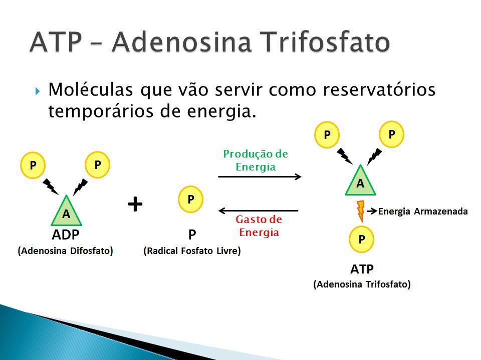 Moléculas que vão servir como reservatórios temporários de energia. Produção de Energia Gasto de Energia