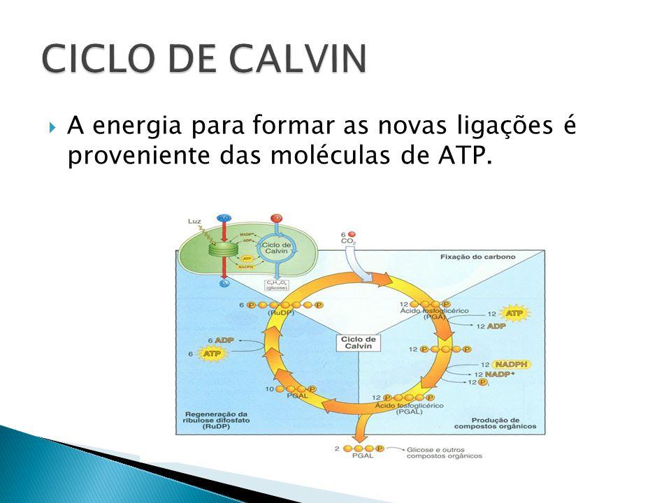 A energia para formar as novas ligações é proveniente das moléculas de ATP.