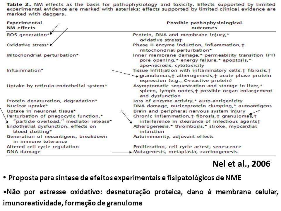 Proposta para síntese de efeitos experimentais e fisipatológicos de NME Não por estresse oxidativo: desnaturação proteica, dano à membrana celular, imunoreatividade, formação de granuloma Nel et al., 2006