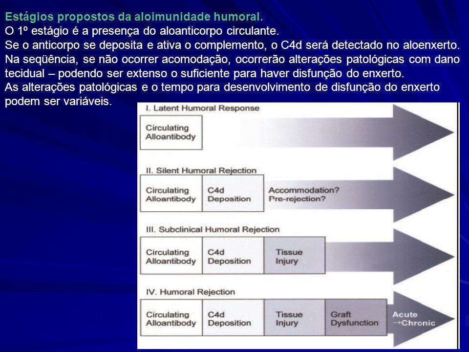 Estágios propostos da aloimunidade humoral. O 1º estágio é a presença do aloanticorpo circulante. Se o anticorpo se deposita e ativa o complemento, o