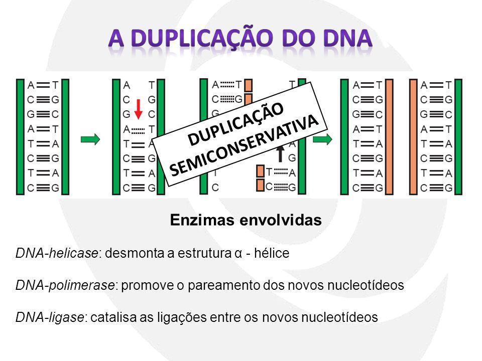DUPLICAÇÃO SEMICONSERVATIVA Enzimas envolvidas DNA-helicase: desmonta a estrutura α - hélice DNA-polimerase: promove o pareamento dos novos nucleotíde