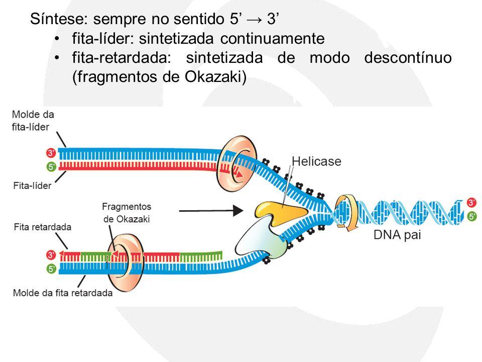 Síntese: sempre no sentido 5 3 fita-líder: sintetizada continuamente fita-retardada: sintetizada de modo descontínuo (fragmentos de Okazaki)