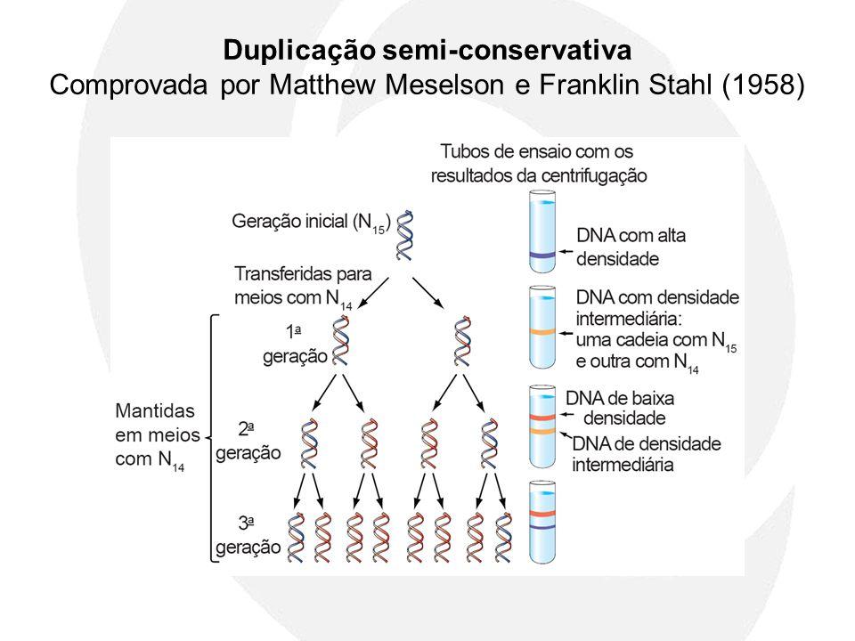 Duplicação semi-conservativa Comprovada por Matthew Meselson e Franklin Stahl (1958)
