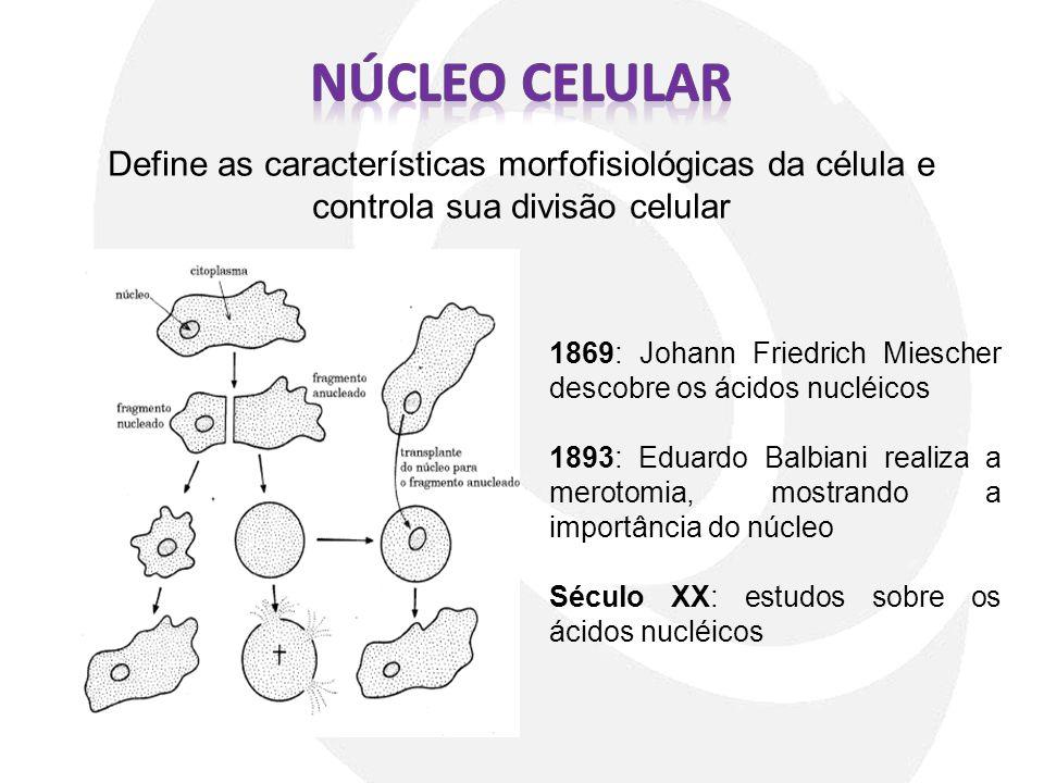 Define as características morfofisiológicas da célula e controla sua divisão celular 1869: Johann Friedrich Miescher descobre os ácidos nucléicos 1893