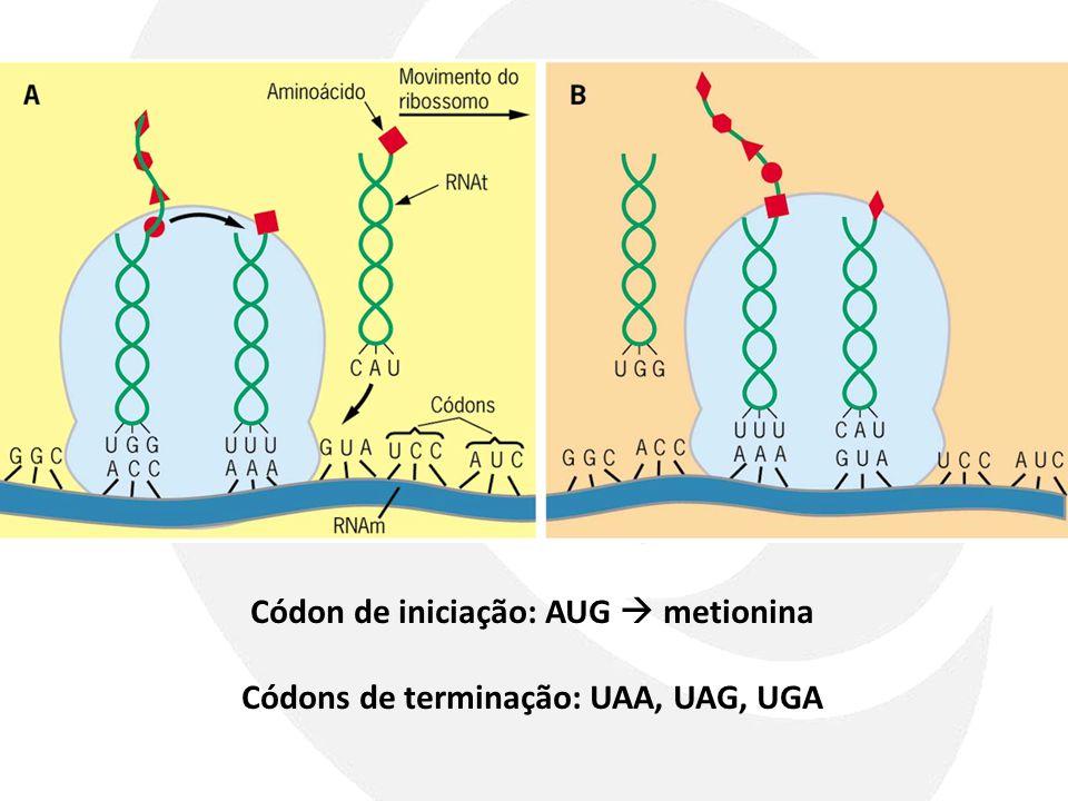 Códon de iniciação: AUG metionina Códons de terminação: UAA, UAG, UGA