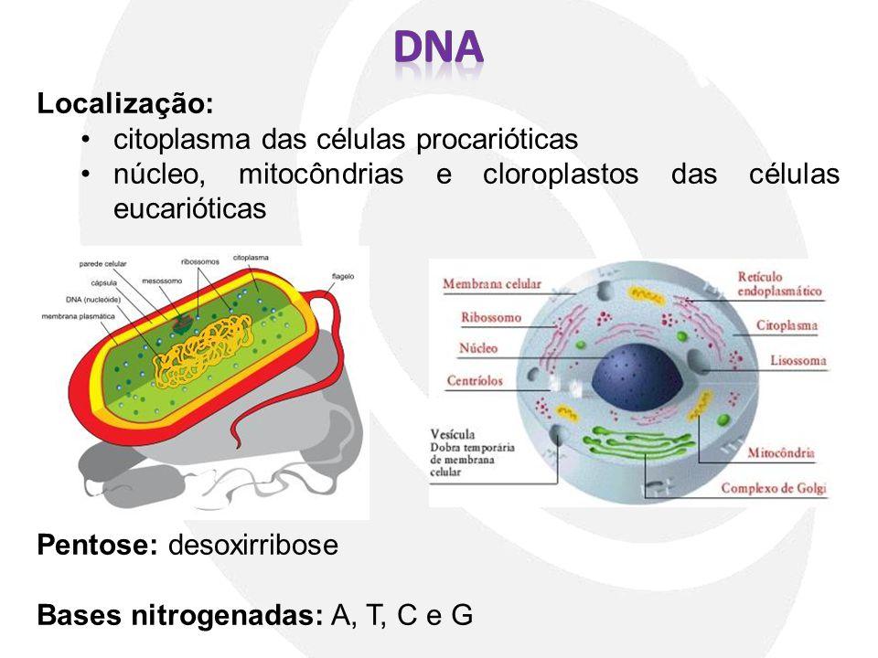 Localização: citoplasma das células procarióticas núcleo, mitocôndrias e cloroplastos das células eucarióticas Pentose: desoxirribose Bases nitrogenad