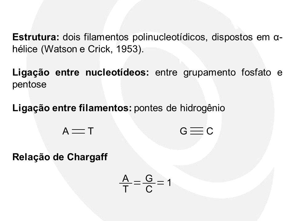 Estrutura: dois filamentos polinucleotídicos, dispostos em α- hélice (Watson e Crick, 1953). Ligação entre nucleotídeos: entre grupamento fosfato e pe