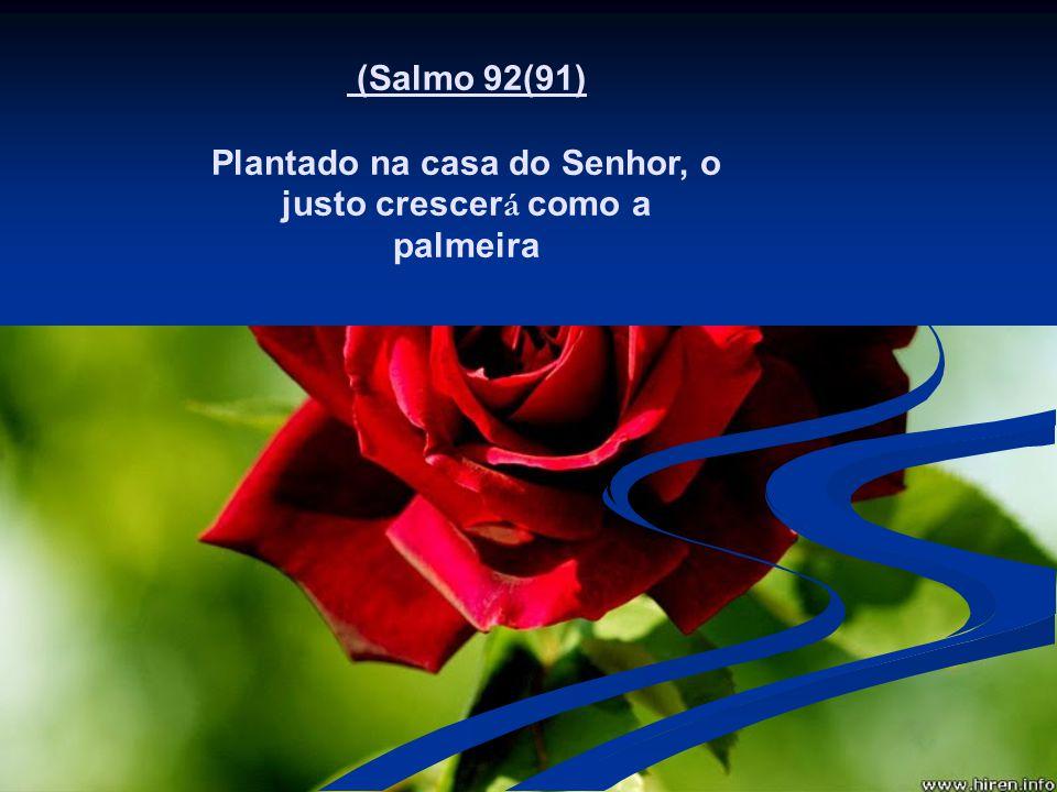 (Salmo 92(91) Plantado na casa do Senhor, o justo crescer á como a palmeira