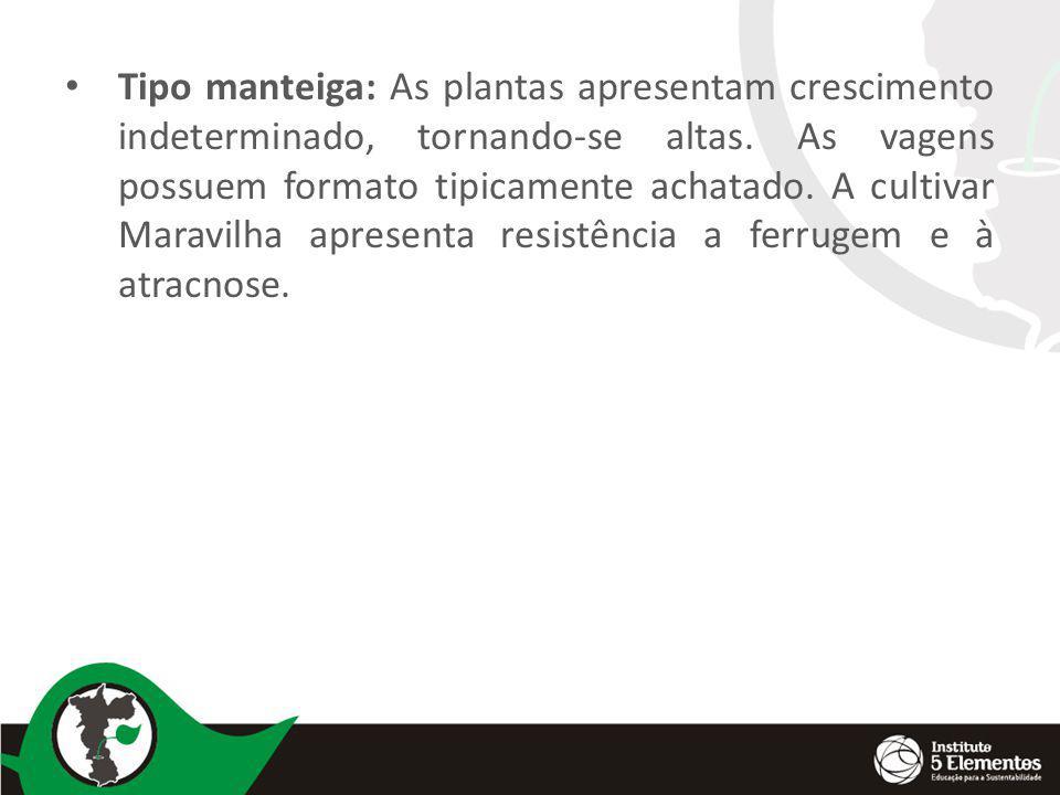 Plantio e espaçamento: Cultivar para plantio estaqueado- 1 a 1,4 m x 0,50 m (2 linhas) no canteiro ou sem canteiro – 2 a 3 plantas/cova.