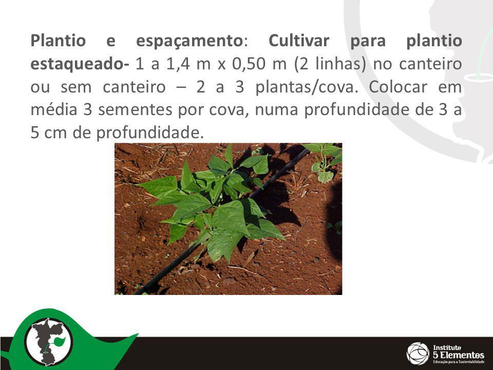 Plantio e espaçamento: Cultivar para plantio estaqueado- 1 a 1,4 m x 0,50 m (2 linhas) no canteiro ou sem canteiro – 2 a 3 plantas/cova. Colocar em mé