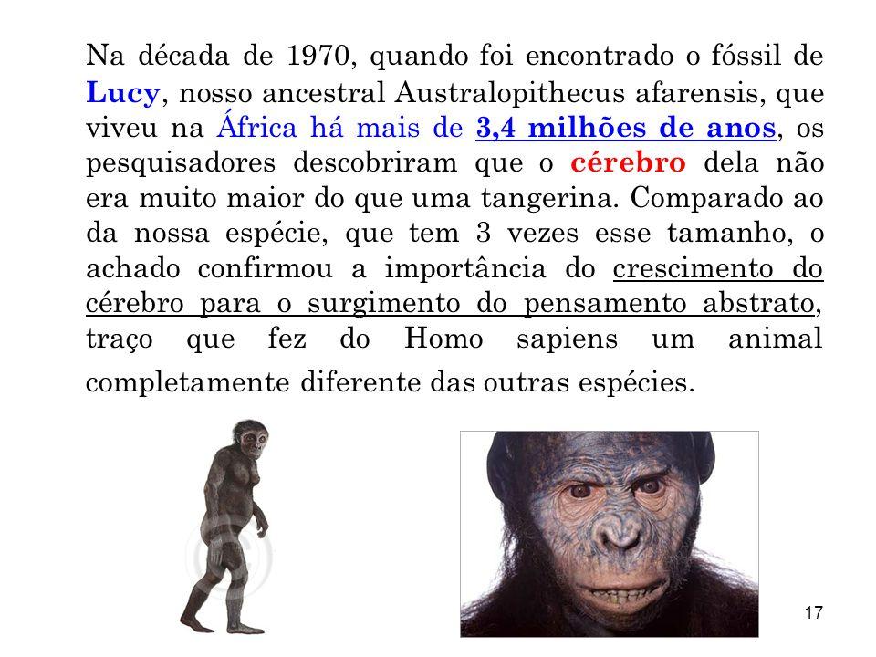 17 Na década de 1970, quando foi encontrado o fóssil de Lucy, nosso ancestral Australopithecus afarensis, que viveu na África há mais de 3,4 milhões d