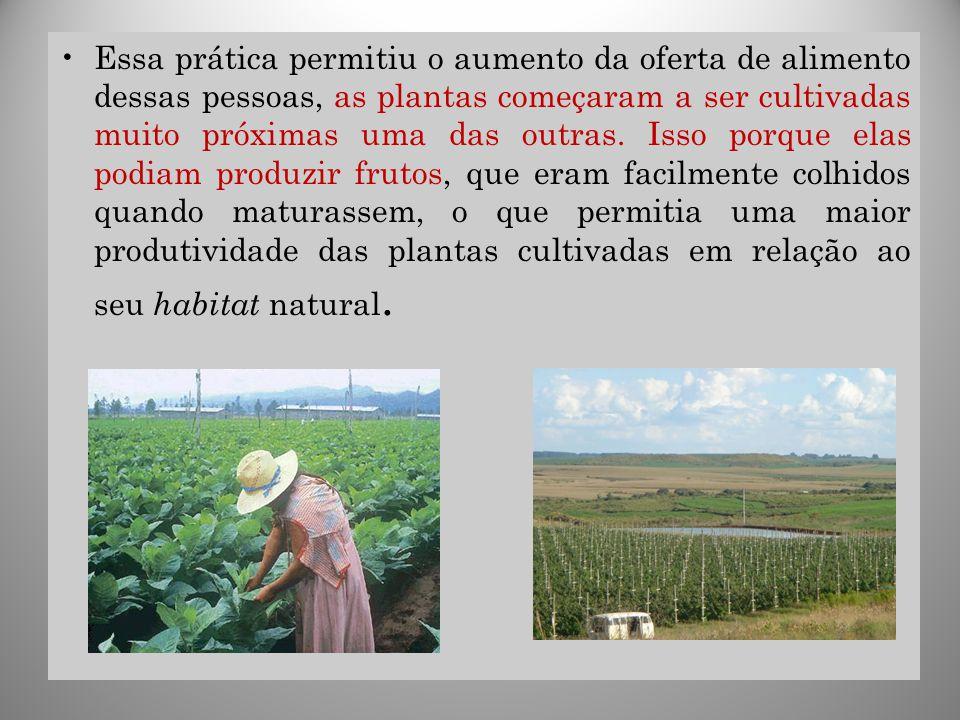 29 Essa prática permitiu o aumento da oferta de alimento dessas pessoas, as plantas começaram a ser cultivadas muito próximas uma das outras. Isso por