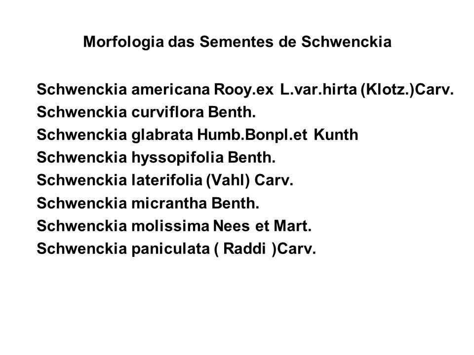 Morfologia das Sementes de Schwenckia Schwenckia americana Rooy.ex L.var.hirta (Klotz.)Carv.