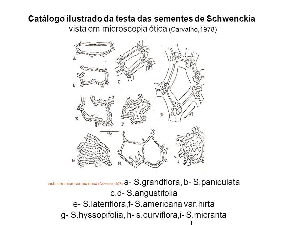 Catálogo ilustrado da testa das sementes de Schwenckia vista em microscopia ótica (Carvalho,1978) vista em microscopia ótica (Carvalho,1978) a- S.grandflora, b- S.paniculata c,d- S.angustifolia e- S.lateriflora,f- S.americana var.hirta g- S.hyssopifolia, h- s.curviflora,i- S.micranta, I