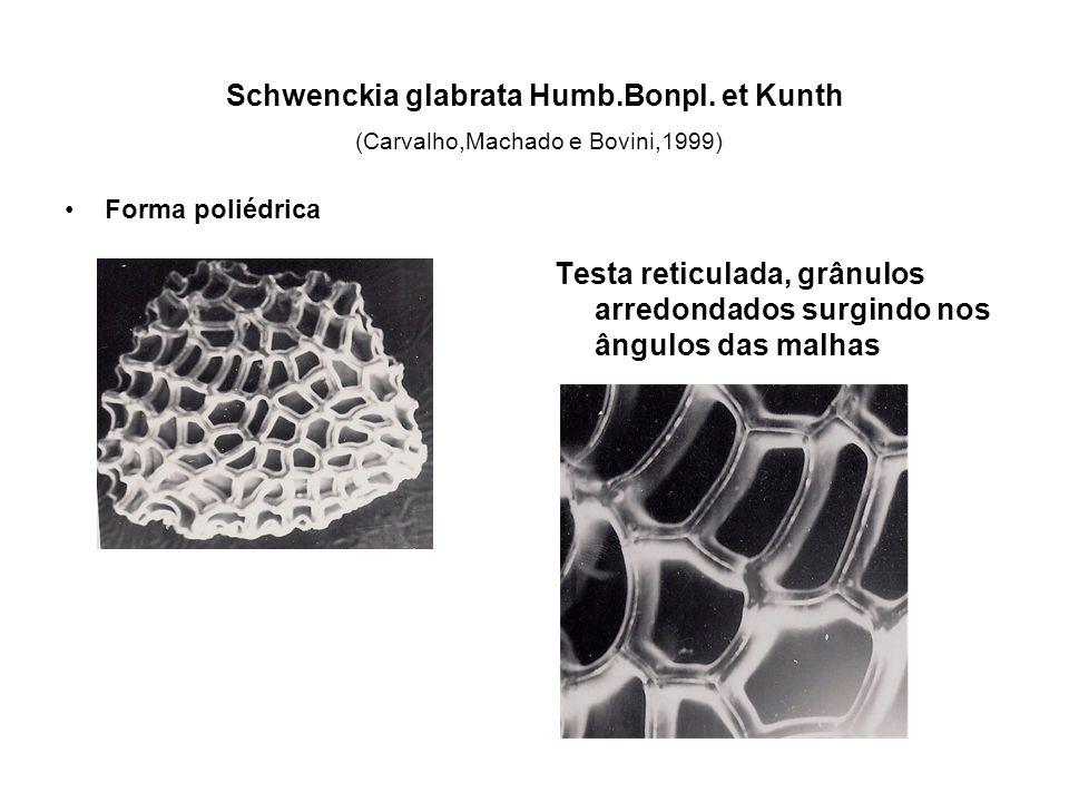 Schwenckia glabrata Humb.Bonpl.