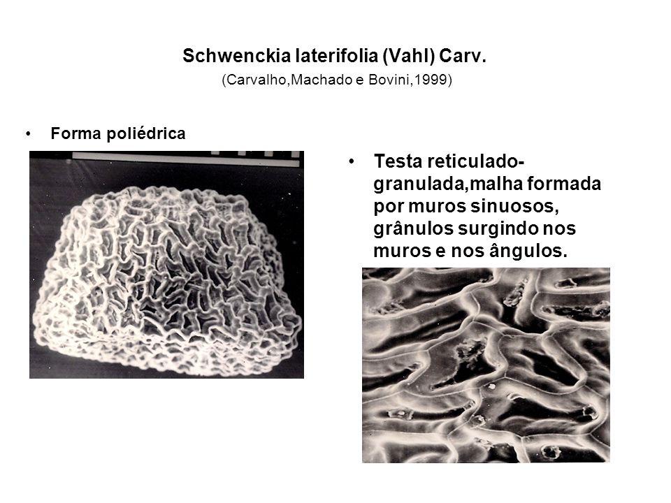 Schwenckia laterifolia (Vahl) Carv. (Carvalho,Machado e Bovini,1999) Forma poliédrica Testa reticulado- granulada,malha formada por muros sinuosos, gr